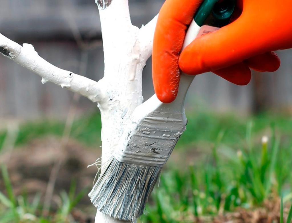 Краска для деревьев и кустарников «Белый Сад»